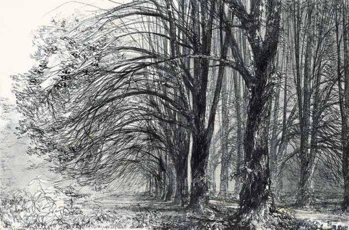 Grafika przedstawiająca aleję lipową na Mazowszu wykonana w limitowanej edycji w formacie zmniejszonym w technice giclée na podstawie rysunku artysty: HENRYK DĄBROWSKI