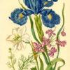 Grafika z kwiatami polnymi i irysem wykonana w technice druku barwnego na podstawie miedziorytu Marii Sibylli Merian z przełomu XVII i XVIII wieku
