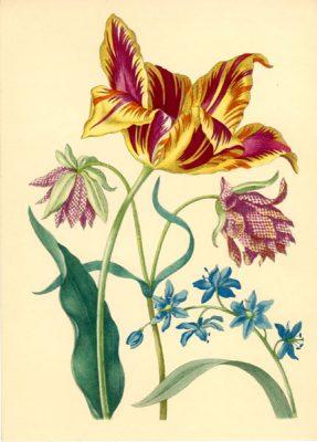 Grafika z tulipanami i hiacyntem wykonana w technice druku barwnego na podstawie miedziorytu Marii Sibylli Merian z przełomu XVII i XVIII wieku