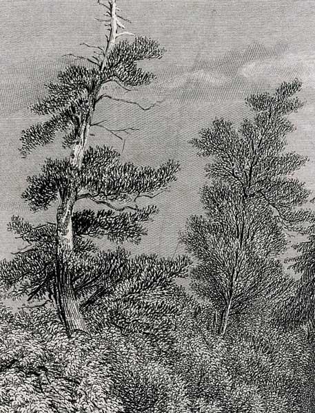 E. Radclyffe