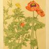 Secesyjna grafika w technice litografii z tłoczoną bordiurą