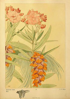 Secesyjna grafika kwiatowa w technice litografii z tłoczoną bordiurą