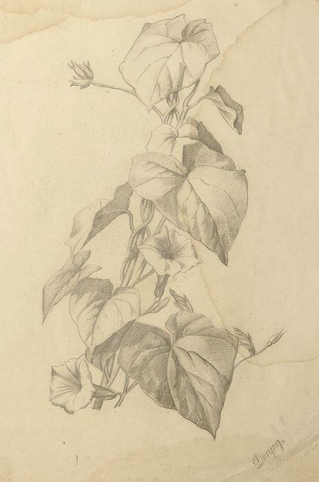 Rysunek ołówkiem na papierze wykonany w II połowie XIX wieku