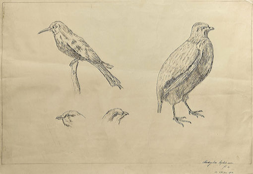 Rysunek tuszem na papierze sygnowany w prawym dolnym rogu przez Sophie von Madeyska w 1912 roku