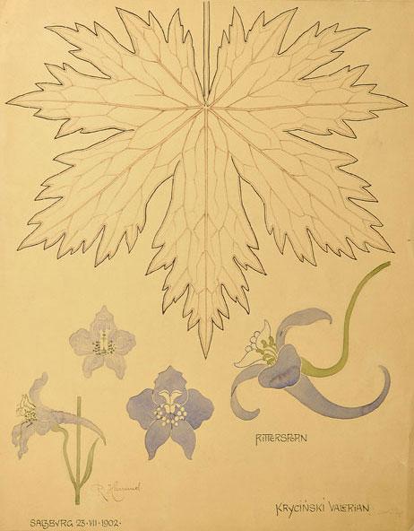 Akwarela z kwiatem oraz liściem ostróżki z kilku stron