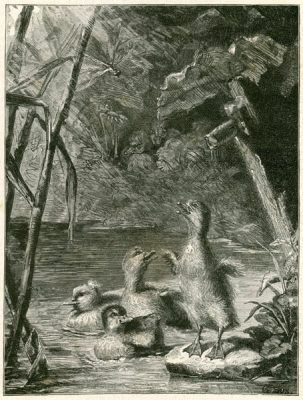 Grafika przedstawiająca młode kaczuszki oraz ważkę wg obrazu Gustawa Süsa