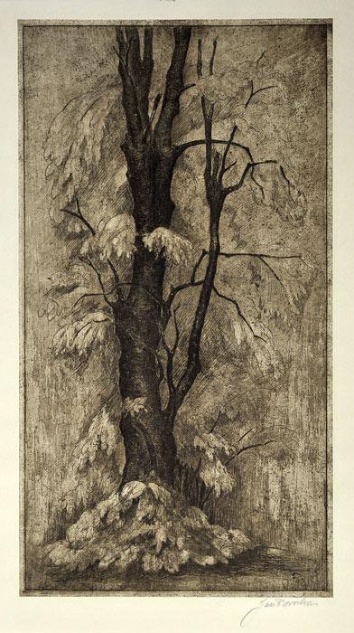 Oryginalna holenderska grafika z I poł XX wieku przedstawiająca konar drzewa. Grafika sygnowana na płycie oraz ołówkiem w prawym dolnym rogu: Jan Ponstyn.
