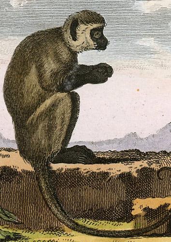 le sagouin ou singe de nuit). Rytował L'Epine wg Jacques de Seve.