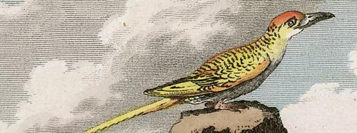 l'oiseau du tropique). Rytował L'Epine wg Jacques de Seve.