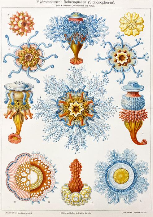 stara grafika, litografia, Meyers