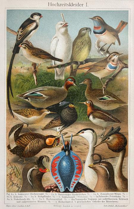 """Oryginalna stara grafika, rycina """"Pary ptaków"""", Meyers, ok. 1880"""