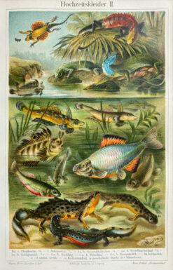 """Oryginalna stara grafika, rycina """"Pary zwierząt"""", Meyers, ok. 1880"""