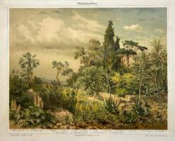 """Original old print, engraving """"Mittelmeerflora"""", Meyers, ok. 1880"""